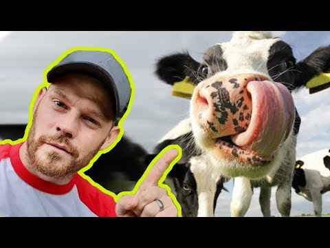 LETS MAKE THIS COW LAME! | How To Avoid Over Trimming | The Hoof GP