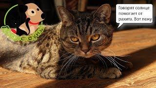 Рахит у щенка, котенка. Причины, симптомы и лечение
