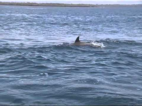 2007-17 Kenia dolfijnen (Dolphins) Wim Peters.mp4