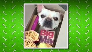 Cute and Funny Dogs Videos Compilation #01