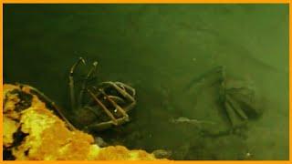Озеро в Котором не Выживет Никто