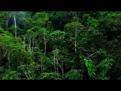 Дикая природа  Джунгли   Тропический лес  центральной америки   Документальный фильм