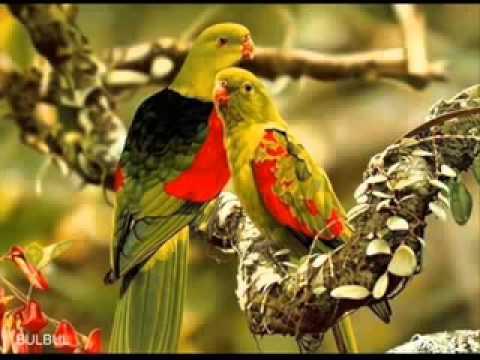 bangla song Mone Koro Amar Jonmota -