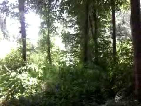 Vergewaltigung Im Wald Porno