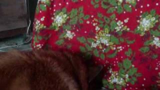 My Dog loves catnip