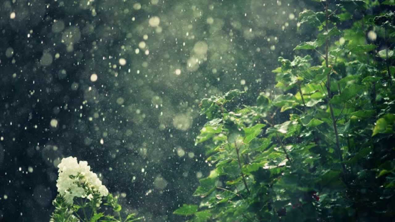 ASMR 10 Hours Soft Rain Healing Ambient Sounds for Deep Sleeping Meditation