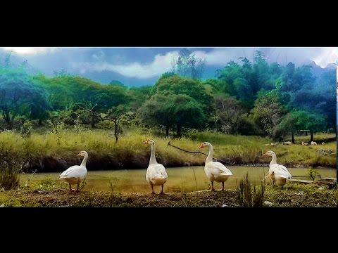 Jungle Hut Masinagudi - A video tour of Masinagudi Resort