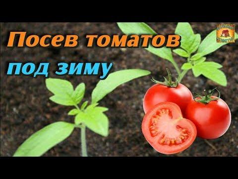 Уникальный способ выращивания томатов без рассады. Сеем томаты под зиму без заморочек. Дачные советы