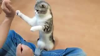 Хорошо надрессированный кот