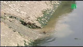 Dừng thí điểm làm sạch sông Tô Lịch bằng chế phẩm Redoxy 3c | VTC14
