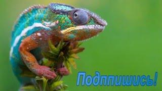 Рептилии  -1   Яшерицы фото