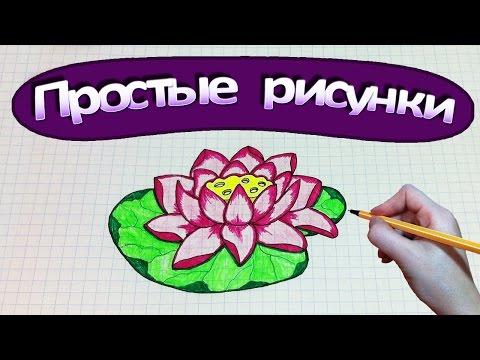 Лотос цветок: описание с фото, правильное выращивание