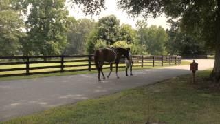 Expert Tips for Feeding Show & Performance Horses
