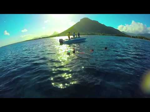 Swimming with the Dolphins in Mauritius - Black River