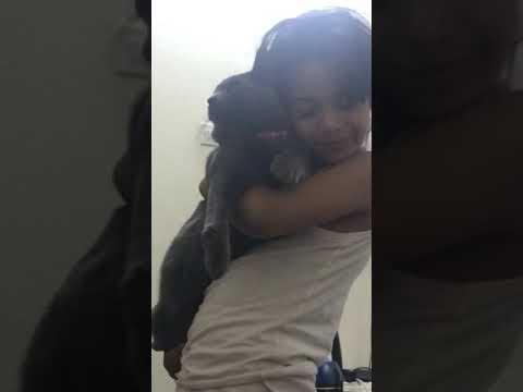 سايمُن مع لمى Korat cat