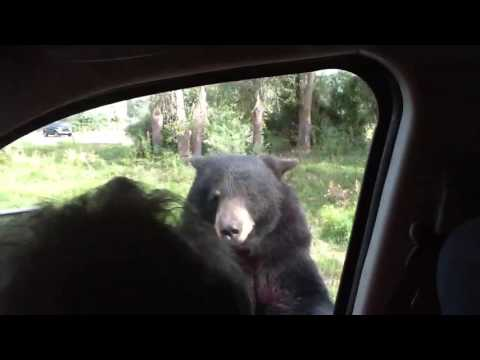 Kids scream as Bear opens van door