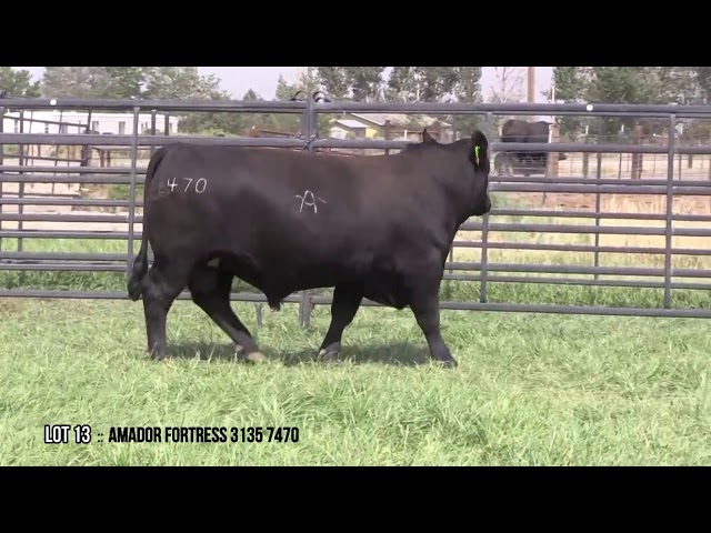 Mid Valley Bull Sale Lot 13