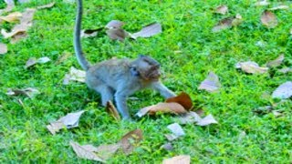 Million Pity Orphanage Jessie Beaten By Dolly and All Baby Monkey Fight Her, She Crying No One Help