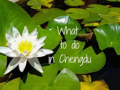 What to Do in Chengdu - Niccolo Chengdu
