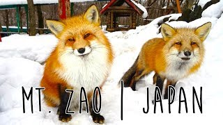 Surround yourself with adorable animals at the Fox Village | Zao, Japan