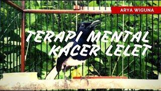 Download Mp3 Hilangkan Mental Kacer Mbagong Dalam 3 Menit, Terapi Khusus Kacer Lelet, 99% Amp