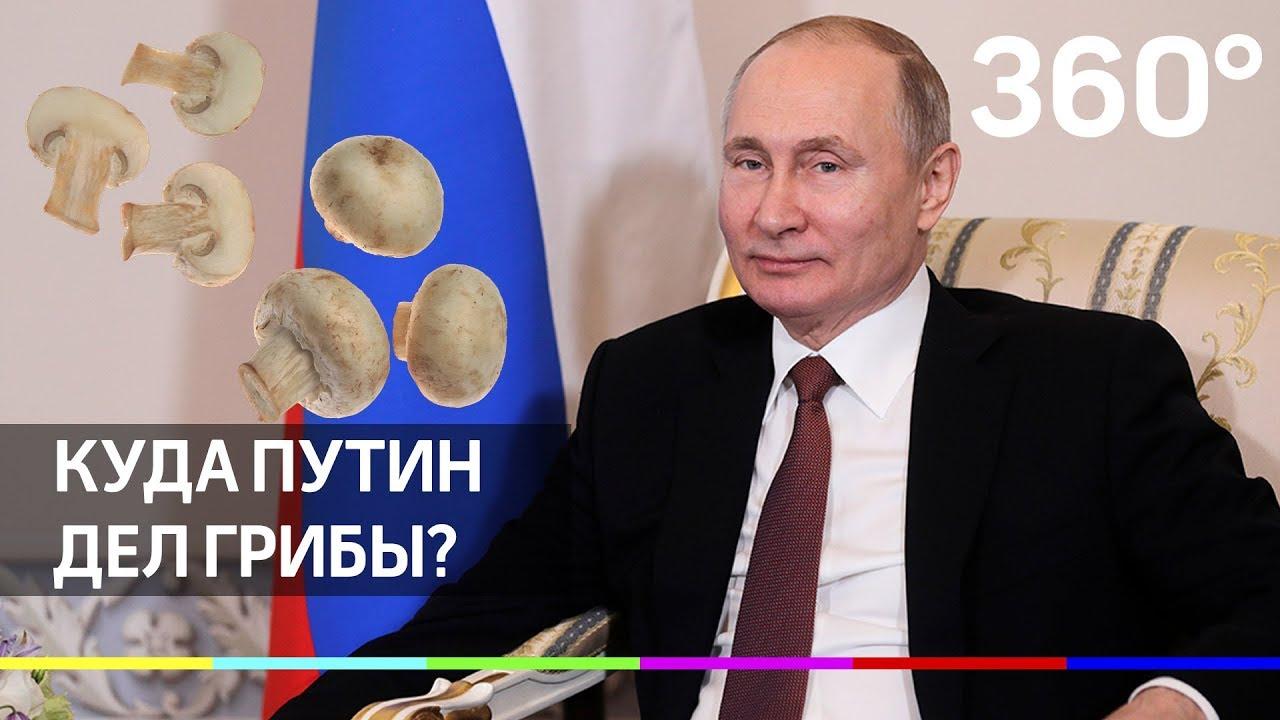 Куда Путин дел грибы и почему он отдыхает в России