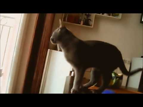 Russian Blue Cat -The Hunters in the Snow
