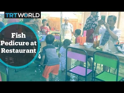 Fish Pedicure: Fish Spa Restaurant A Hit In Indonesia