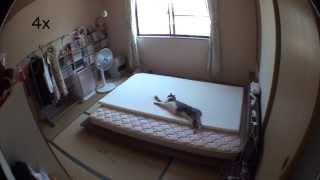 8時間ぐらい撮影した中から猫が動いてる箇所を取り出し4倍速再生にし...