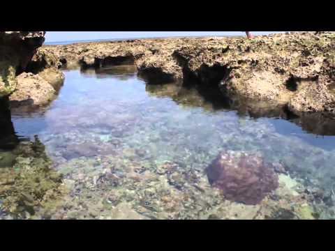 Japan Trip: Pools of Tropical Fish Colorful sea life Kumejima Okinawa39