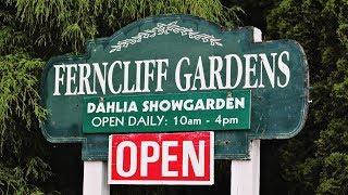 Dahlias at Ferncliff Gardens