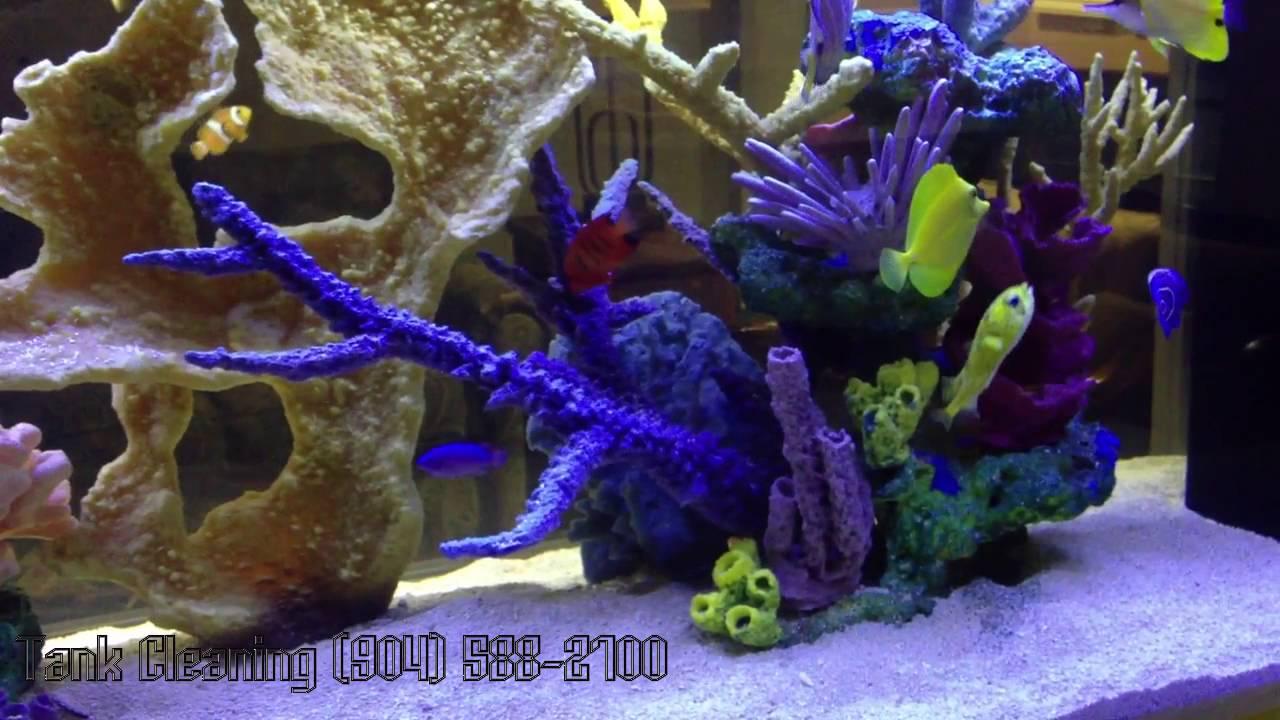 Freshwater aquarium fish jacksonville fl -