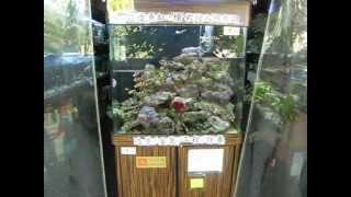 小龍水族館:提供影片~海魚...生態缸...!