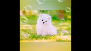 Tiktok viral..!! baby dog cute