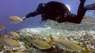 Diving Подводный дайвинг