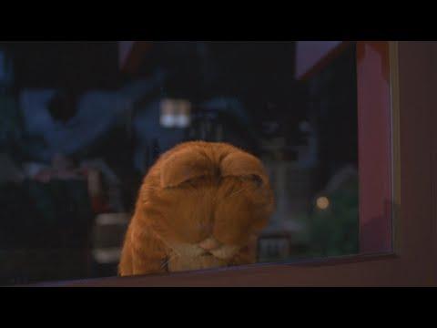 The British Are Coming Scene Garfield 2 2006 Movie Clip Youtube
