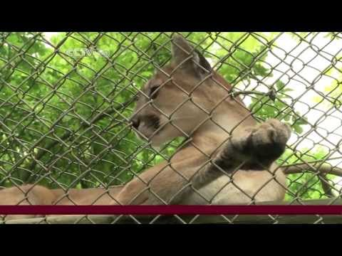 Florida Wildlife Outpost A Sanctuary For Exotic Animals