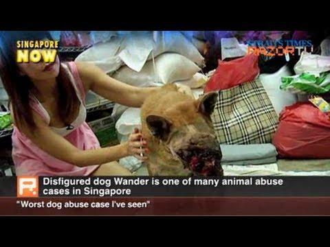'Worst dog abuse case I've seen' (Disfigured dog Pt 2)
