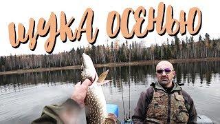 Ловля щуки на спиннинг в октябре / Ловля окуня / Как разделать рыбу