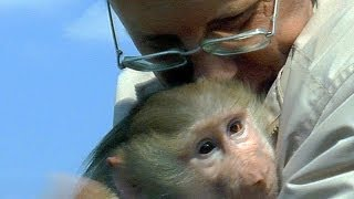 Юная обезьяна гамадрил Тиби и директор зоопарка.