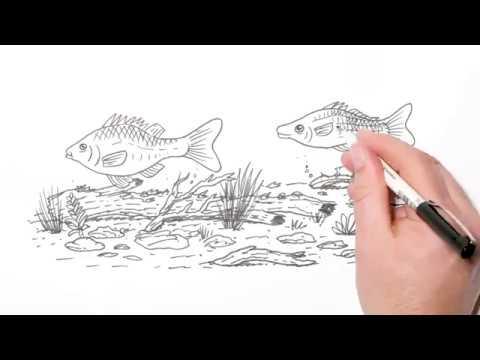 Fish Screens Saving Native Fish