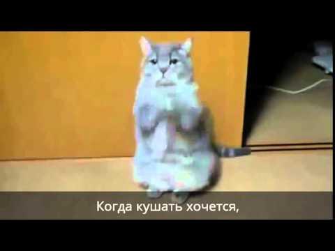 Ютуб поют коты