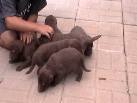 Annie Draco pups 8 8 16