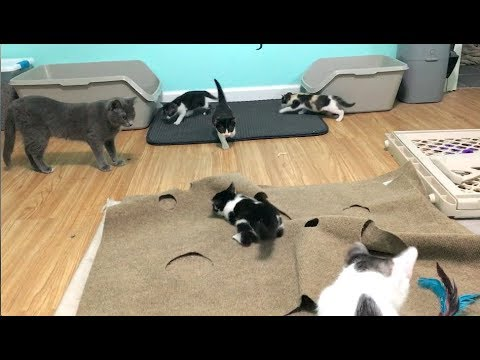 Kittens Are Crazy & Winning A Feral Cat's Trust With A Brush - Nursery #27