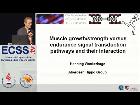 Muscle growth/strength versus endurance signal transduction pathways and their Dr. Wackerhage