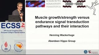Gambar cover Muscle growth/strength versus endurance signal transduction pathways and their - Dr. Wackerhage
