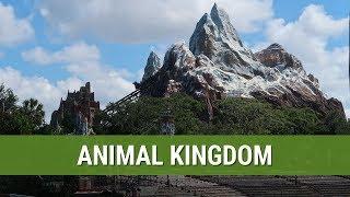 Animal Kingdom | Day Six | Sep 2018 - Walt Disney World Trip
