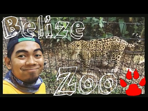 A Visit to Belize Zoo 🐆