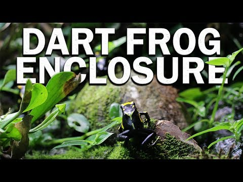 Beautiful Dart Frog Terrarium Youtube