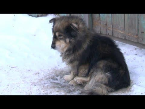 Хозяева переехали и бросили собаку умирать на морозе